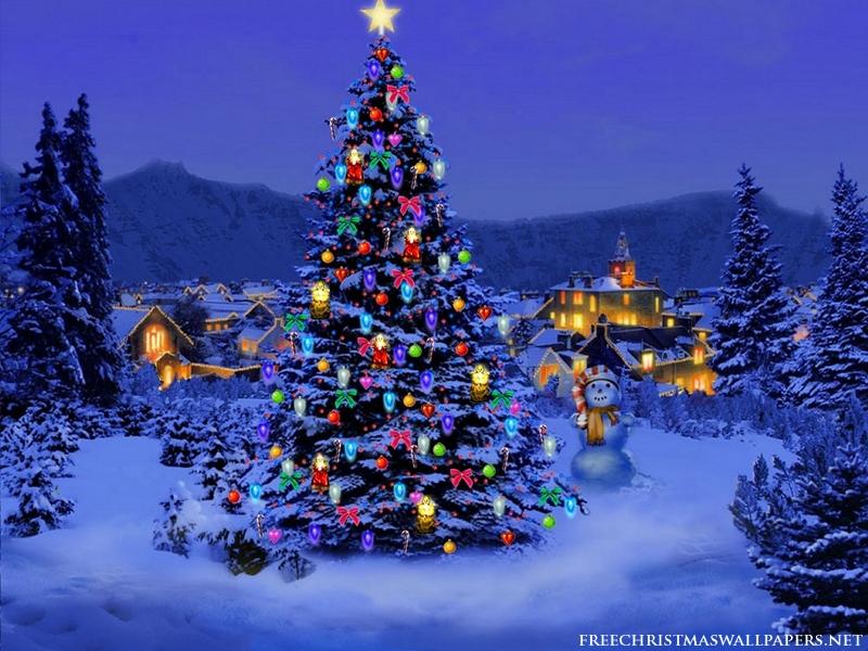 Christmas-Tree-Nature800-551277